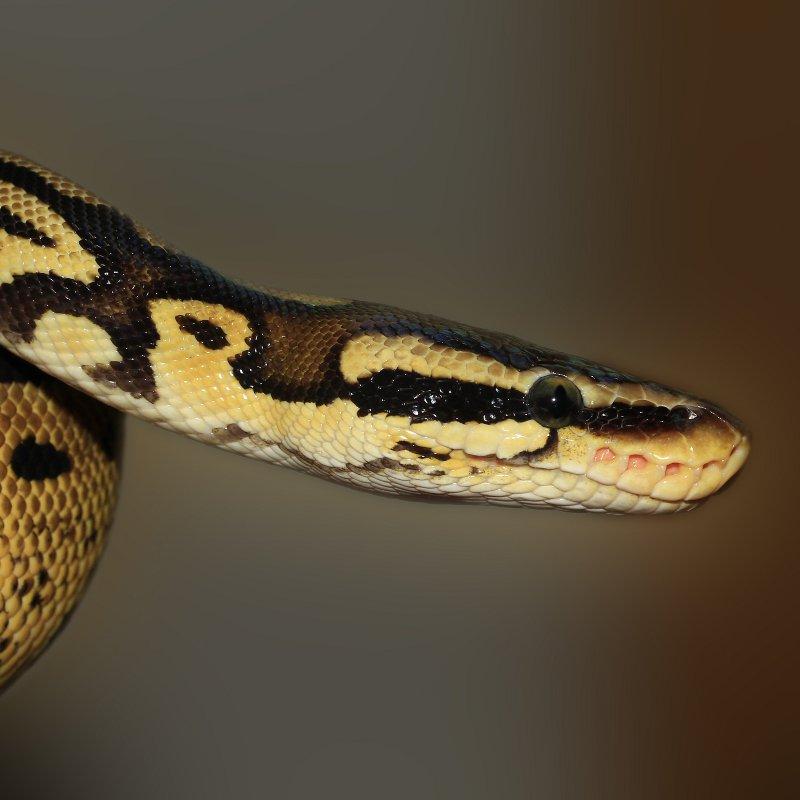 reptile care ashford