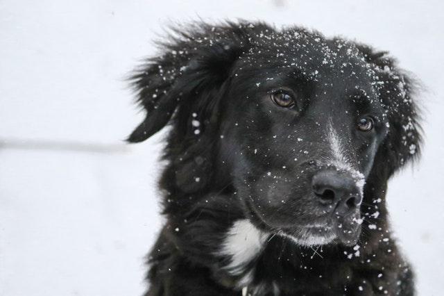 Snow for Ashford again!